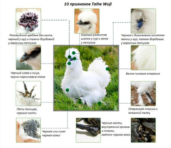 Изображение 10 признаков Тайхэ Вуцзи