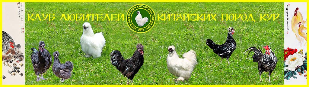 Клуб любителей китайских пород кур